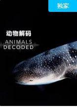 动物解码(连载01集)