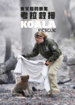 大火后的重生:考拉救援